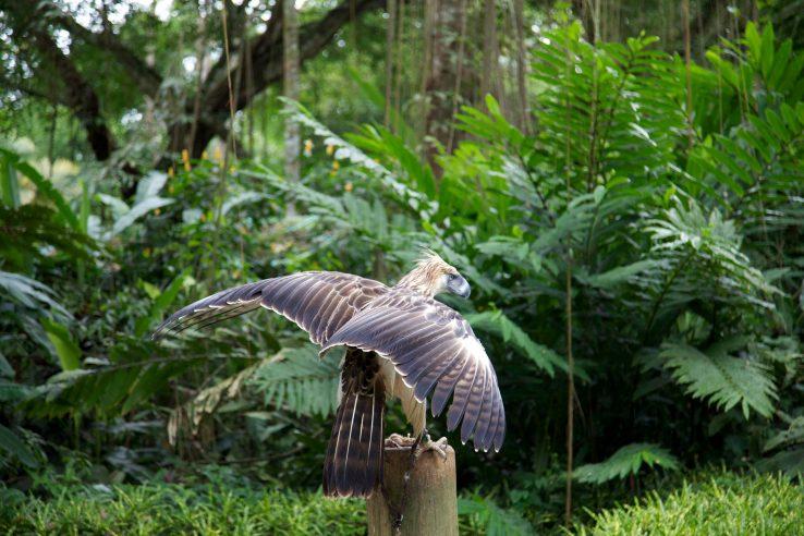 Park filipinskog orla