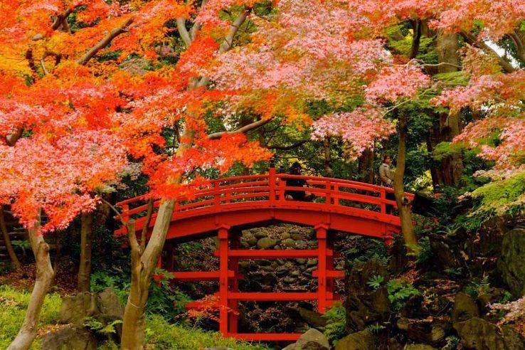 tokio-japanske bašte i parkovi-atrakcija-japan