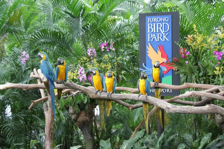 Jurong Park ptica