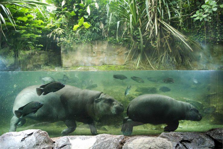 Singapurski Zoo Vrt